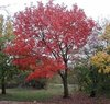 Beautiful_tree_1